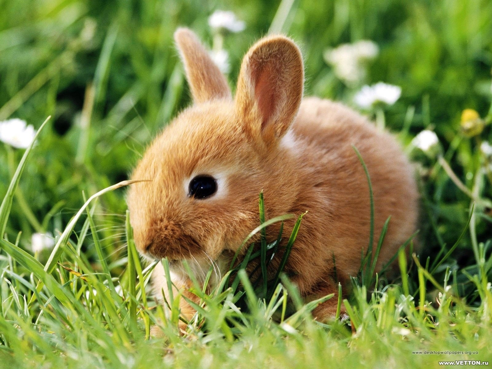 238 download wallpaper Animals, Rabbits screensavers and pictures for free