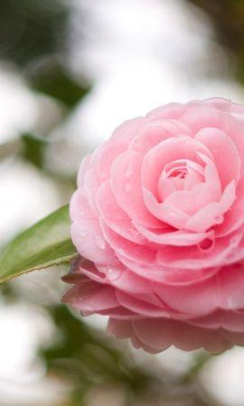 22523 скачать обои Растения, Цветы - заставки и картинки бесплатно
