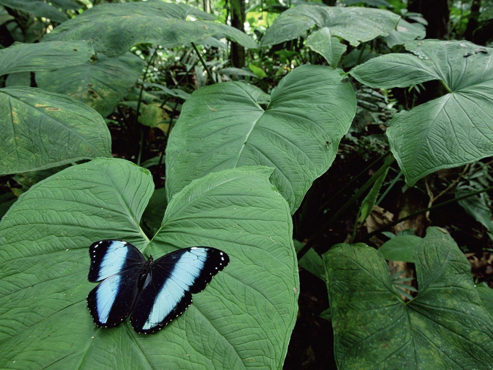 7489 descargar fondo de pantalla Plantas, Mariposas, Insectos, Hojas: protectores de pantalla e imágenes gratis