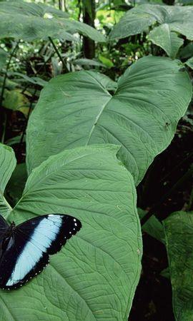 7489 скачать обои Растения, Бабочки, Насекомые, Листья - заставки и картинки бесплатно