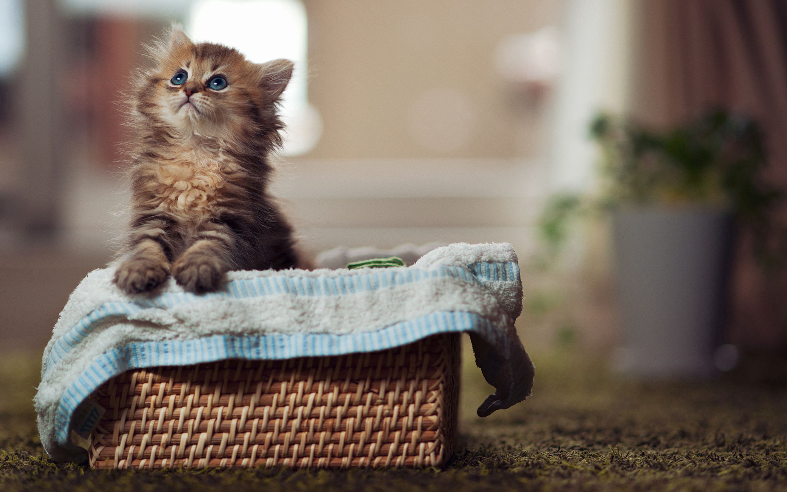 78255 Screensavers and Wallpapers Kitten for phone. Download Animals, Fluffy, Kitty, Kitten, Basket, Material, Curiosity, Look pictures for free