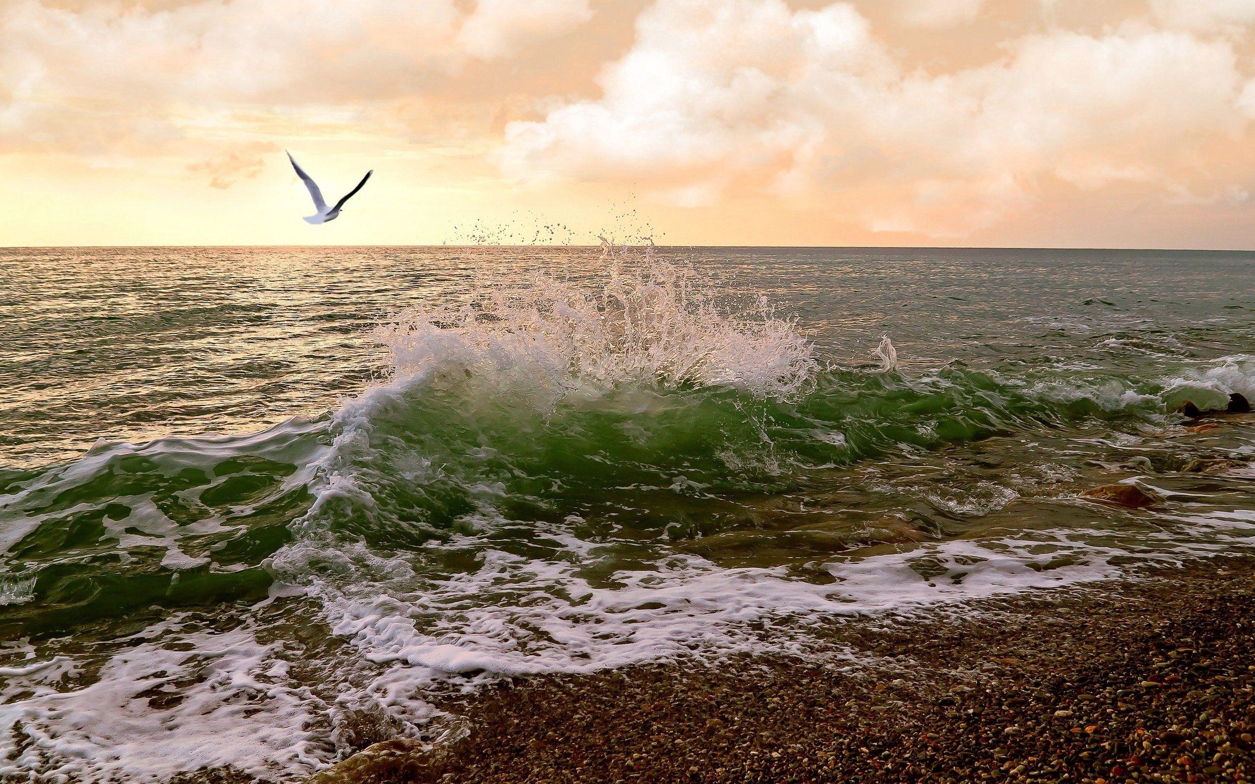116886 Заставки и Обои Волны на телефон. Скачать Природа, Море, Прибой, Чайка, Небо, Волны картинки бесплатно