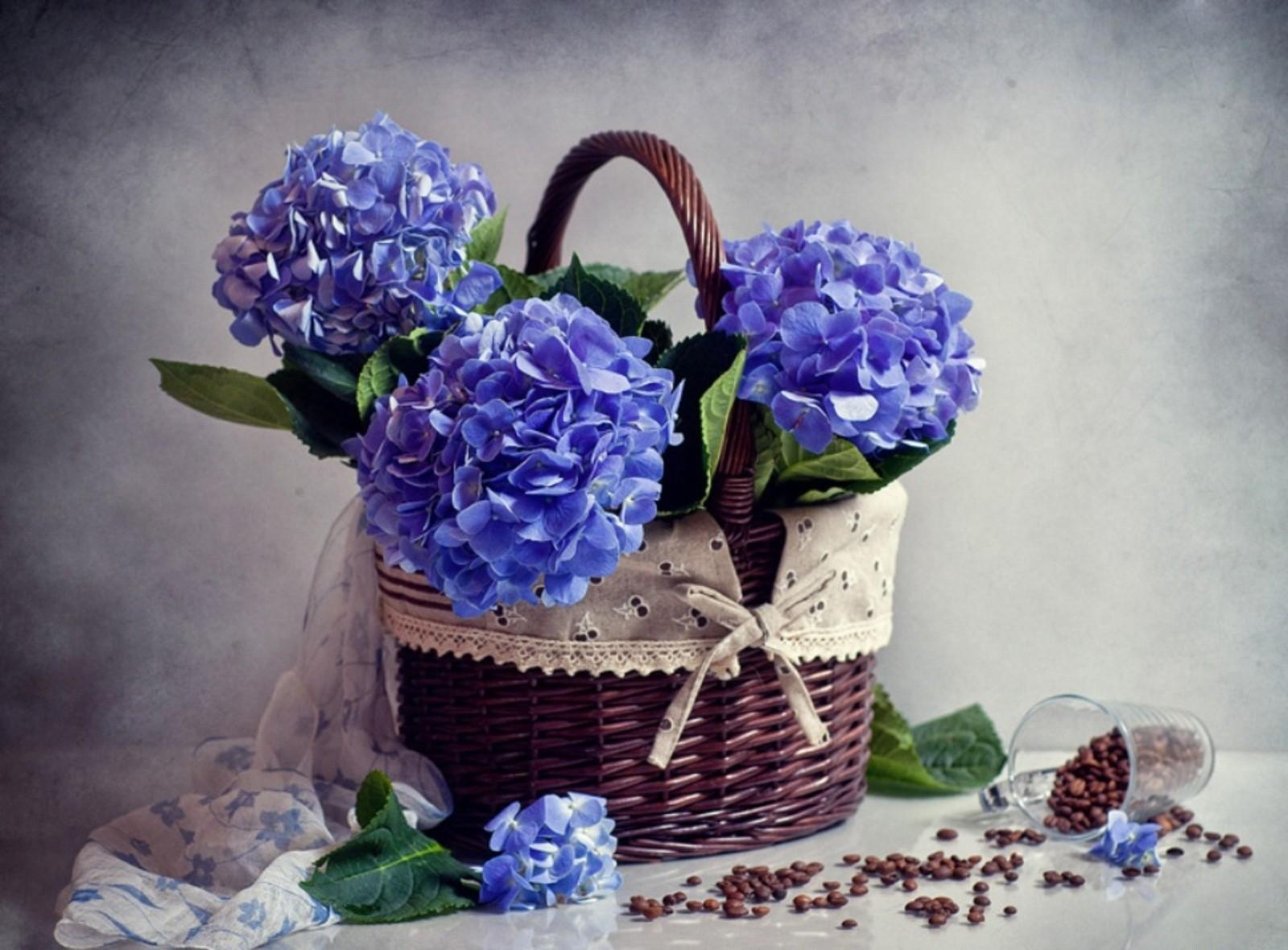 109471 Screensavers and Wallpapers Scarf for phone. Download Flowers, Coffee, Basket, Hydrangea, Scarf, Scattering, Placer pictures for free