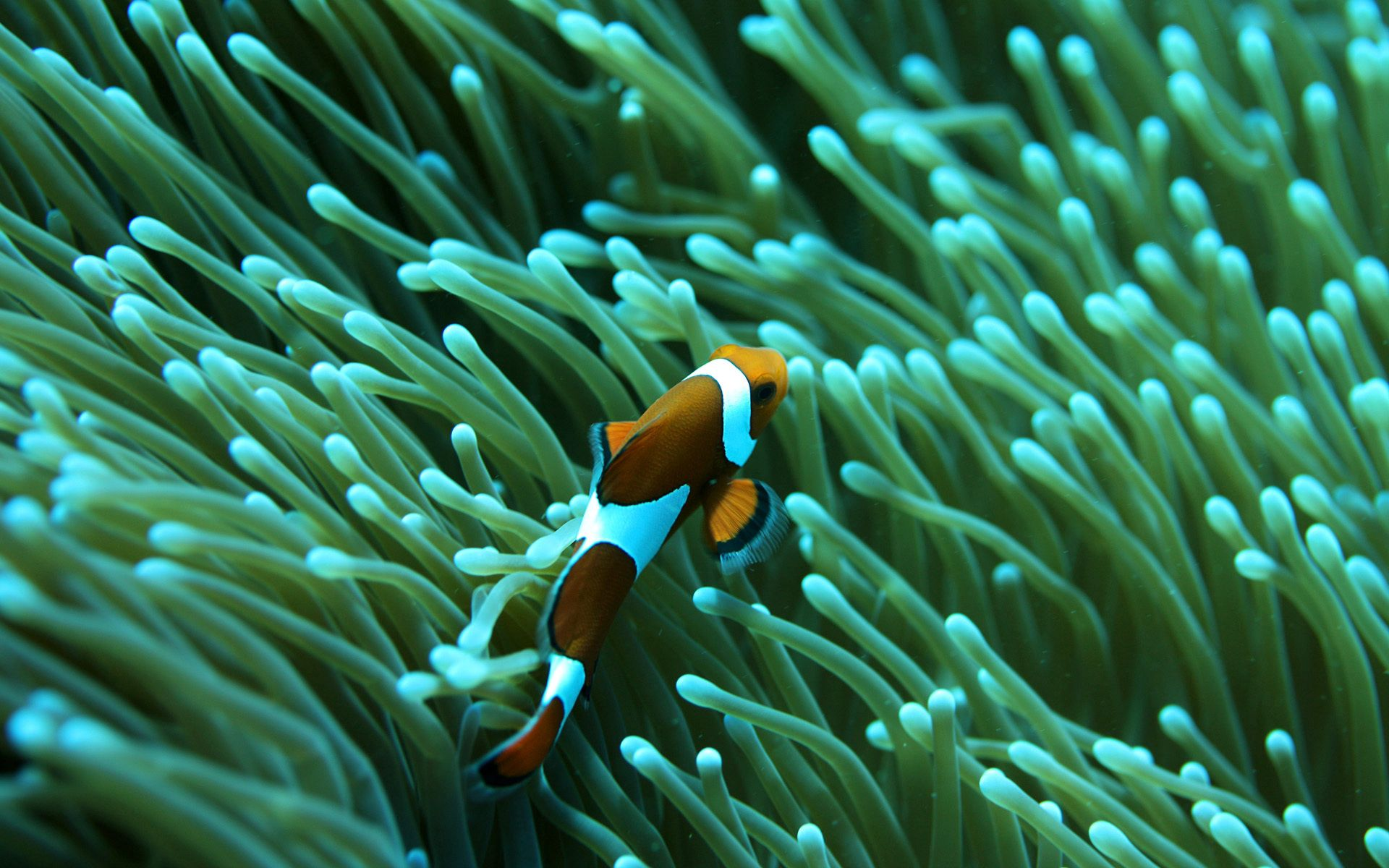 64252 download wallpaper Animals, Fish, Underwater World, To Swim, Swim, Ocean, Sea screensavers and pictures for free