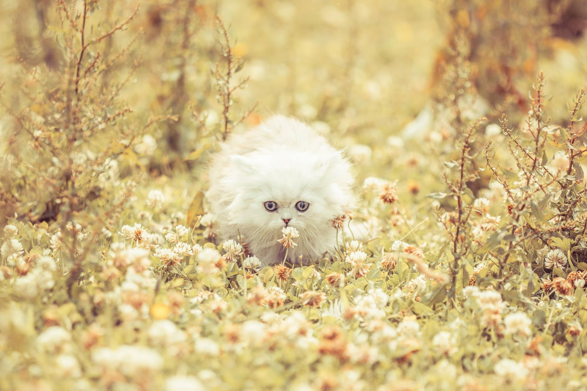 141606 Screensavers and Wallpapers Kitten for phone. Download Animals, Flowers, Grass, Fluffy, Kitty, Kitten, Run Away, Run pictures for free