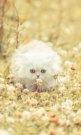 141606 download wallpaper Animals, Kitty, Kitten, Fluffy, Grass, Run Away, Run, Flowers screensavers and pictures for free