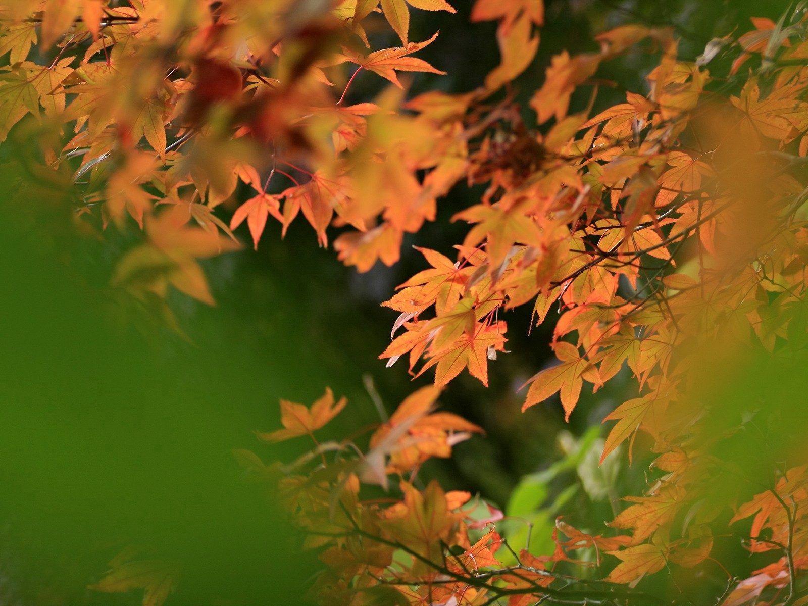 77276 скачать обои Природа, Листья, Осень, Размытость - заставки и картинки бесплатно