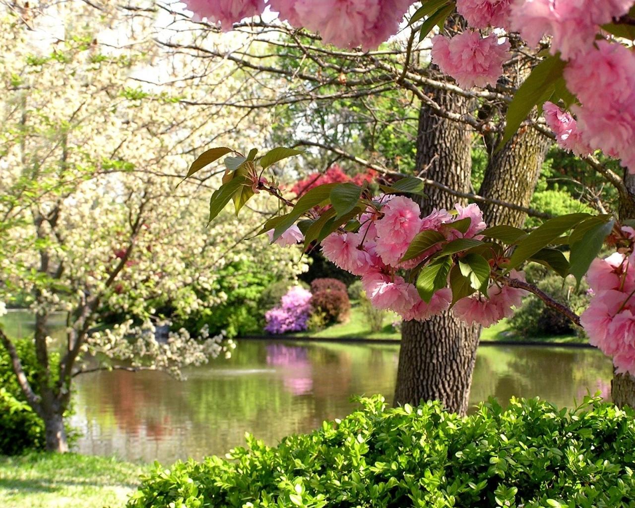 5642 Hintergrundbild herunterladen Bäume, Blumen, Pflanzen, Landschaft - Bildschirmschoner und Bilder kostenlos