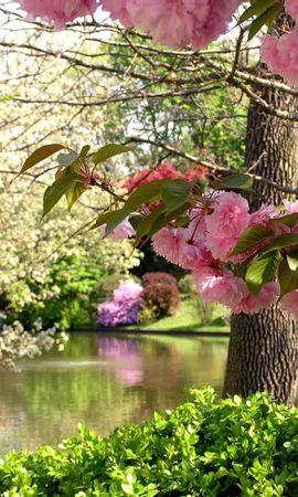 5642 скачать обои Растения, Пейзаж, Цветы, Деревья - заставки и картинки бесплатно