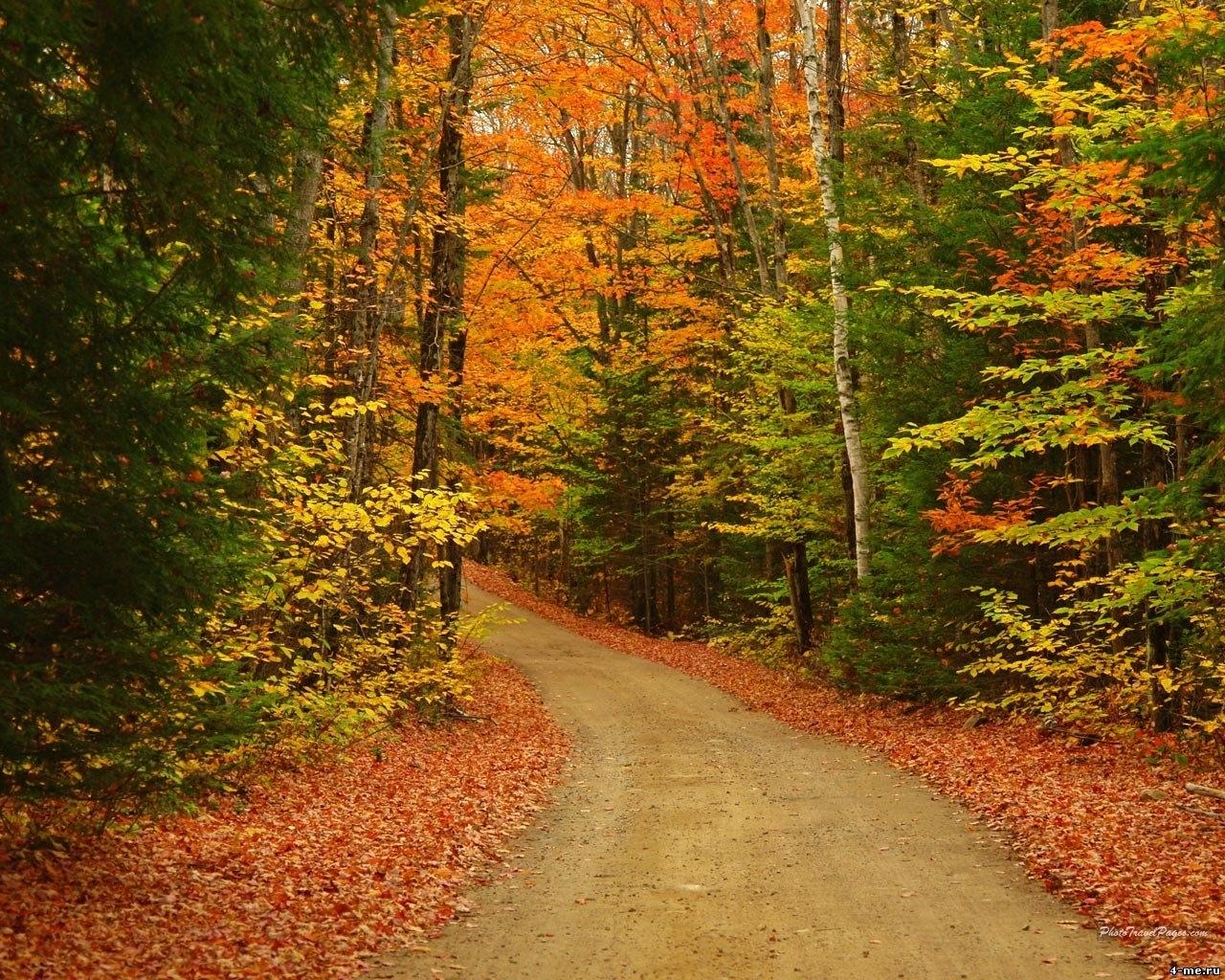 Скачать картинку Осень, Дороги, Пейзаж, Деревья в телефон бесплатно.