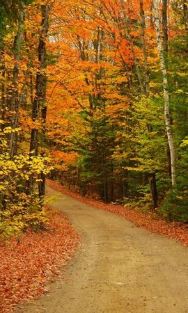 1865 download wallpaper Landscape, Trees, Roads, Autumn screensavers and pictures for free