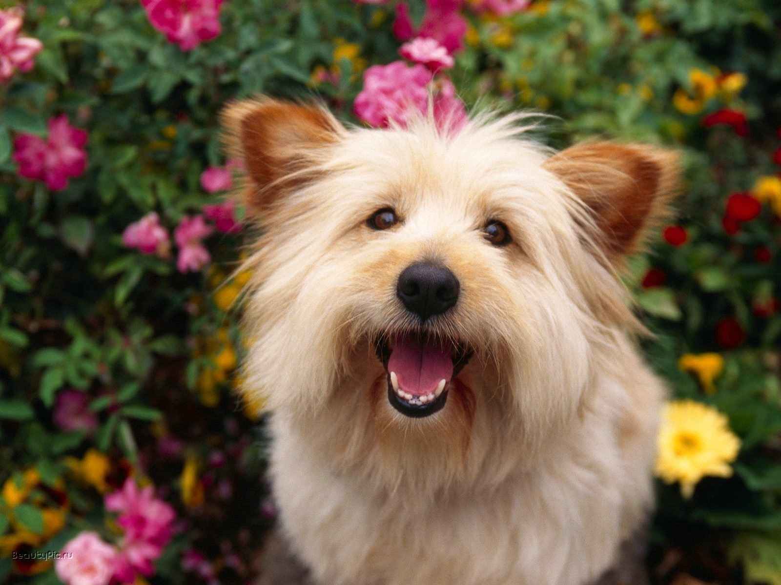 7180 download wallpaper Animals, Dogs screensavers and pictures for free