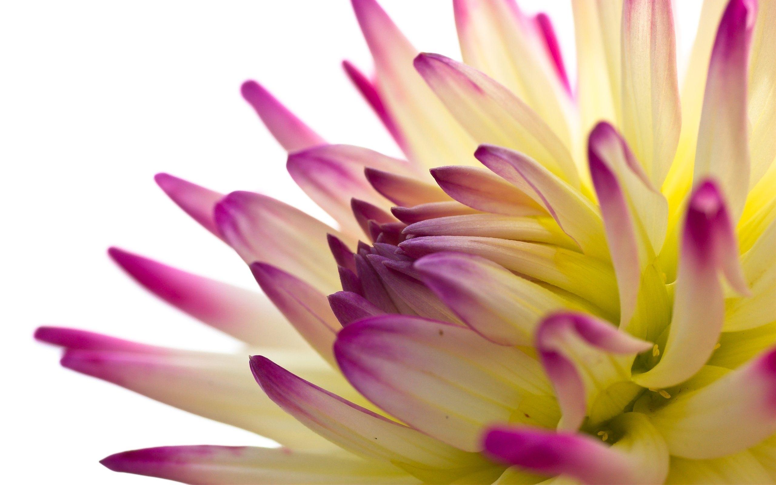 4025 скачать обои Растения, Цветы - заставки и картинки бесплатно