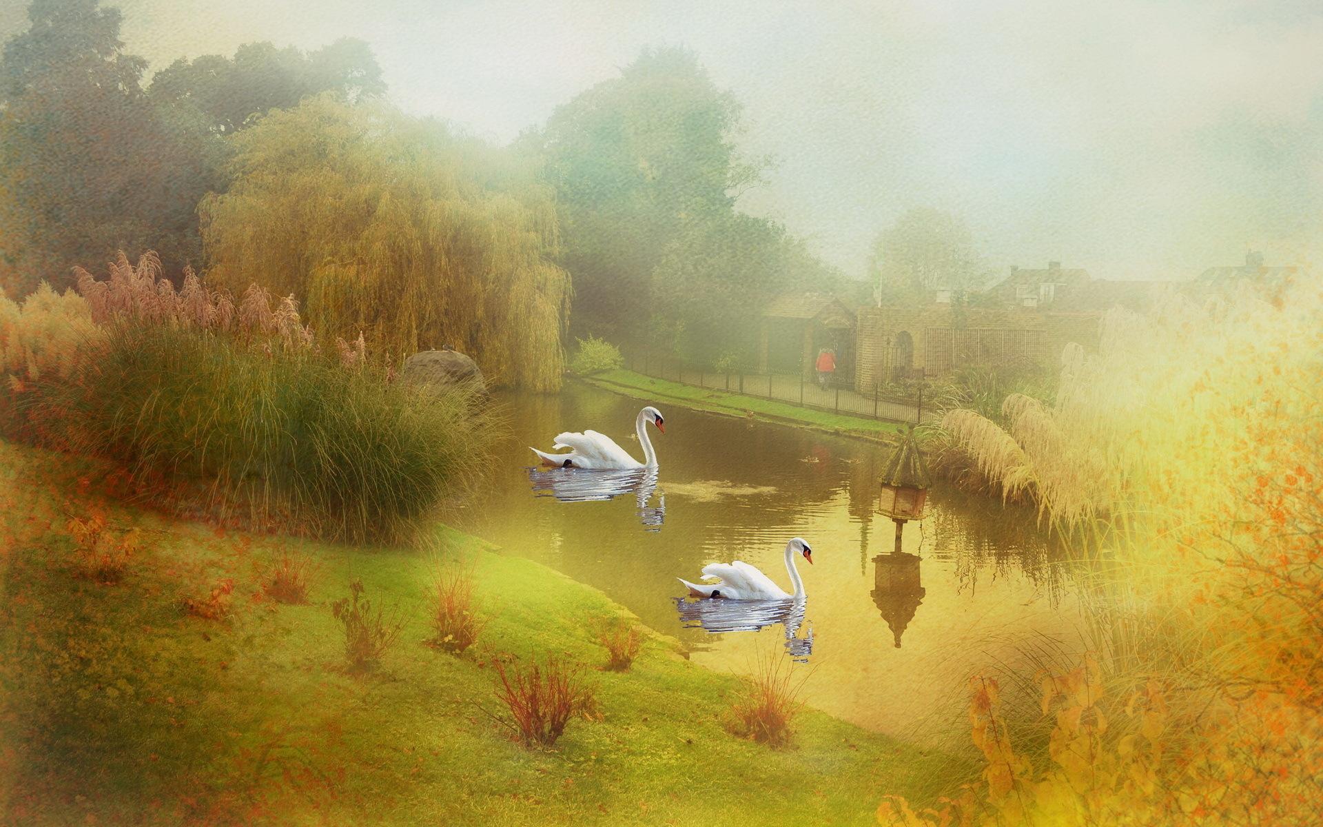 37911 скачать обои Животные, Лебеди, Рисунки - заставки и картинки бесплатно
