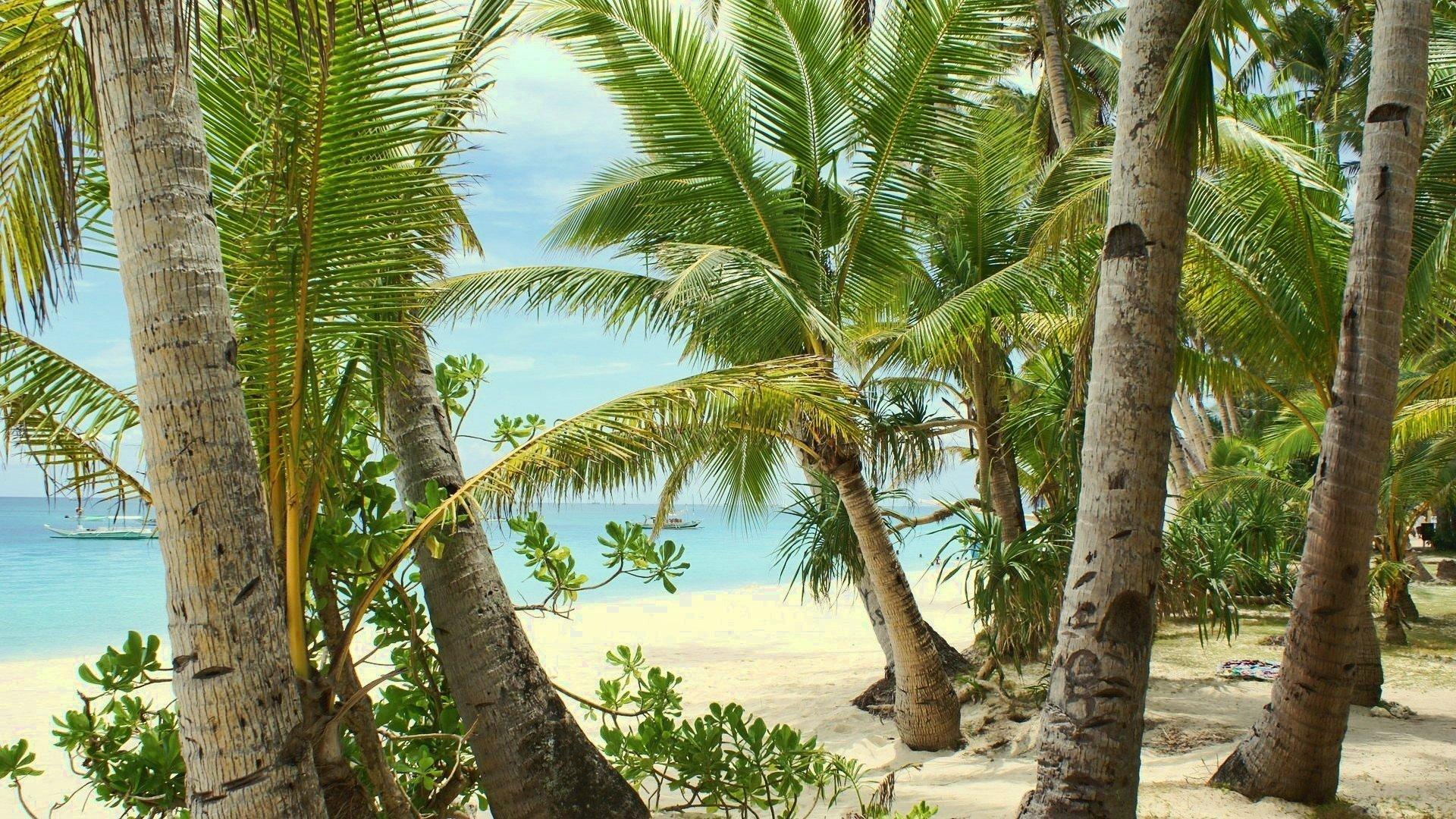 20209 скачать обои Пейзаж, Море, Пляж, Песок, Пальмы - заставки и картинки бесплатно