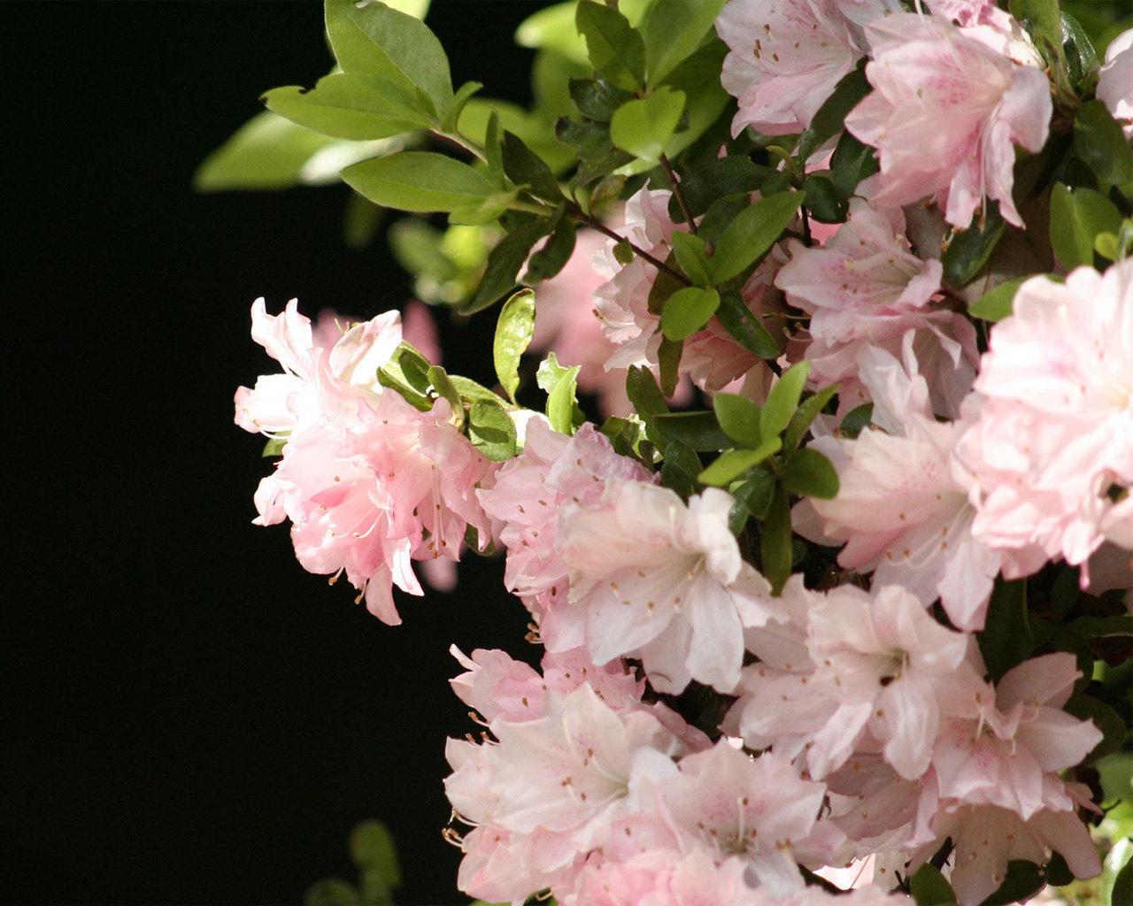 9801 descargar fondo de pantalla Plantas, Flores: protectores de pantalla e imágenes gratis