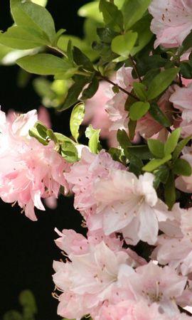 9801 скачать обои Растения, Цветы - заставки и картинки бесплатно