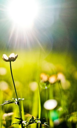 43140 télécharger le fond d'écran Plantes, Fleurs - économiseurs d'écran et images gratuitement