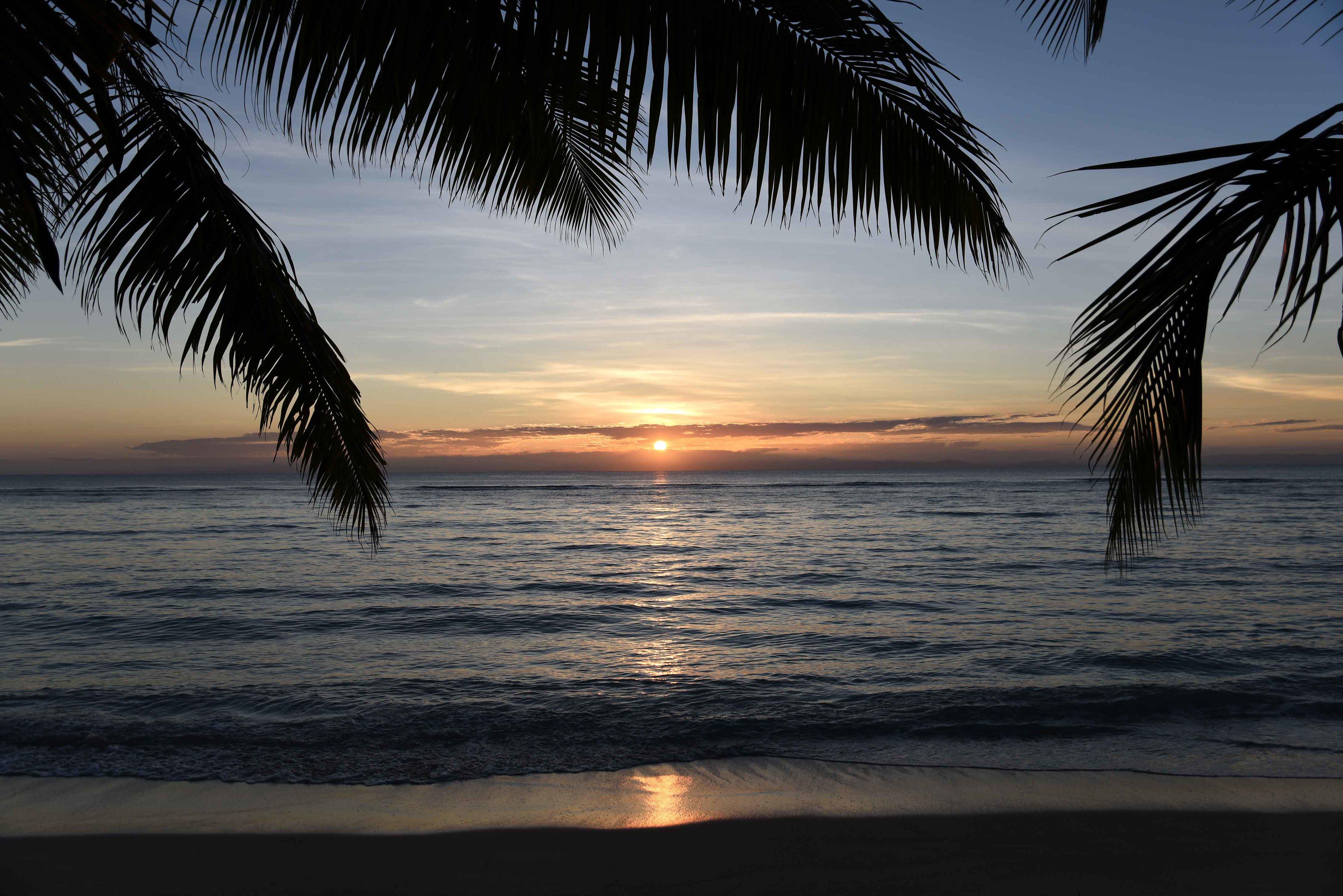 63025 Заставки и Обои Пальмы на телефон. Скачать Природа, Закат, Море, Побережье, Горизонт, Пальмы картинки бесплатно