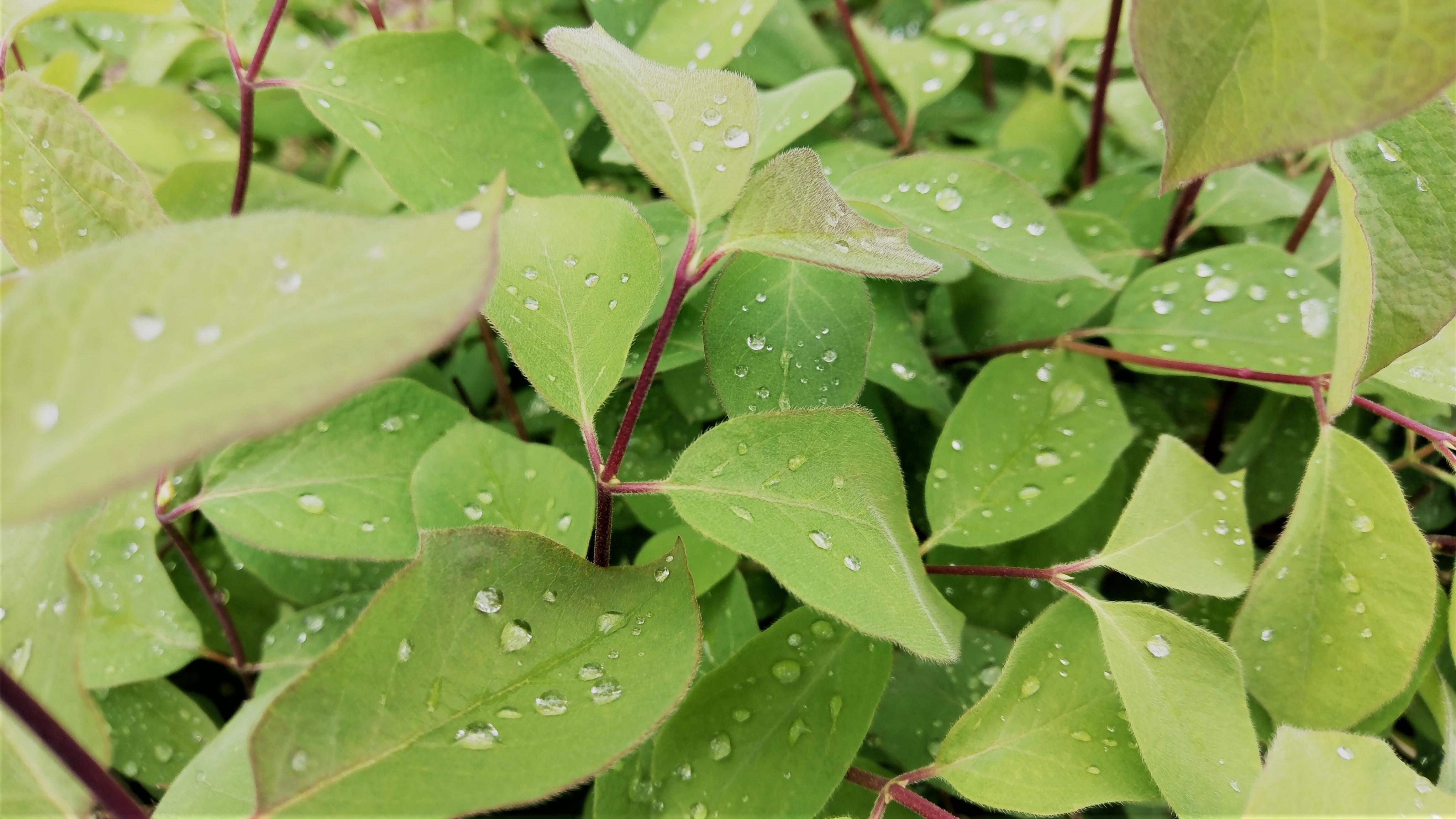 152207 скачать обои Макро, Листья, Растение, Капли, Мокрый - заставки и картинки бесплатно