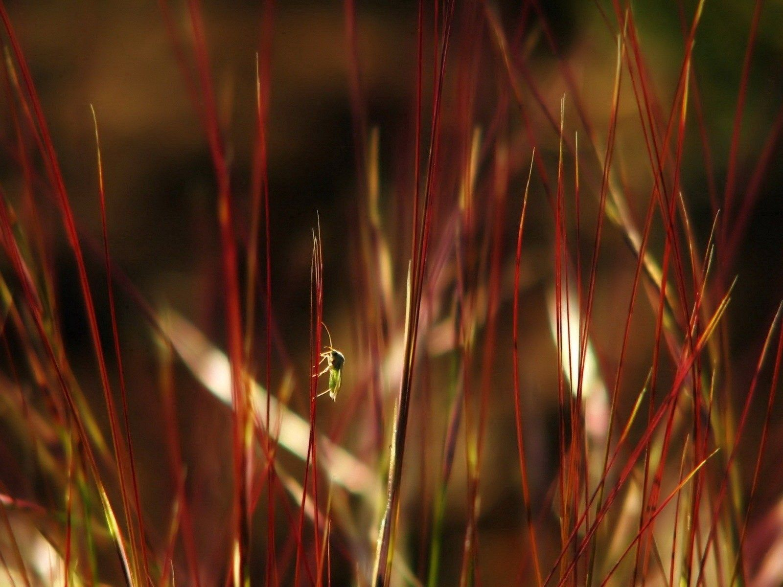 109993 download wallpaper Macro, Grass, Color, Dark, Insects screensavers and pictures for free
