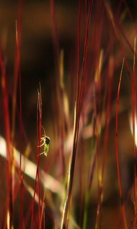 109993 Screensavers and Wallpapers Insects for phone. Download Macro, Grass, Color, Dark, Insects pictures for free