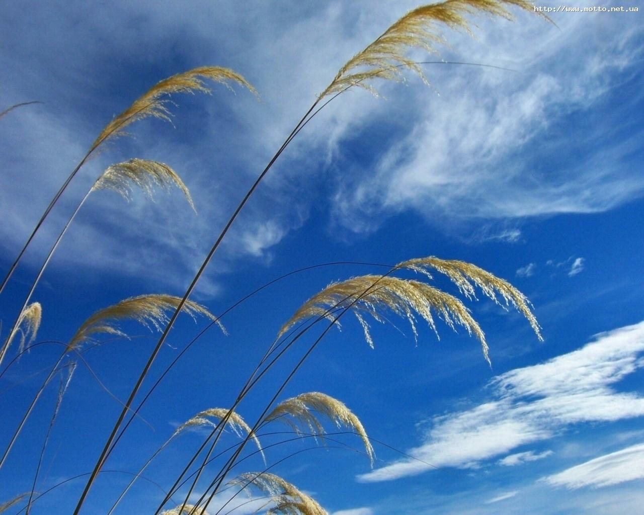 7578 скачать обои Растения, Трава, Небо - заставки и картинки бесплатно