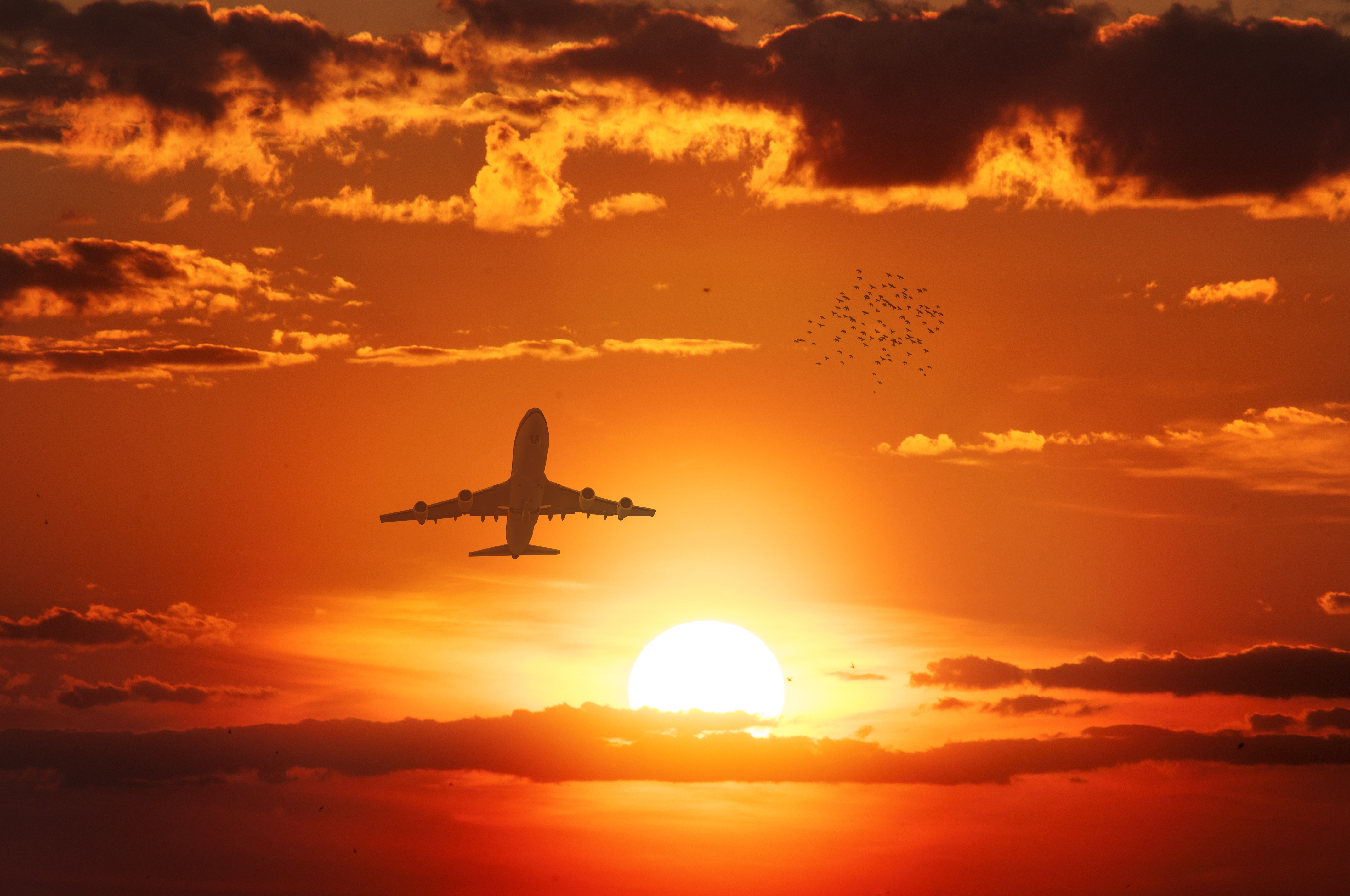 157973 Screensavers and Wallpapers Birds for phone. Download Miscellanea, Miscellaneous, Plane, Airplane, Flight, Sunset, Sky, Sun, Birds pictures for free