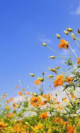 4248 скачать обои Растения, Цветы, Небо - заставки и картинки бесплатно