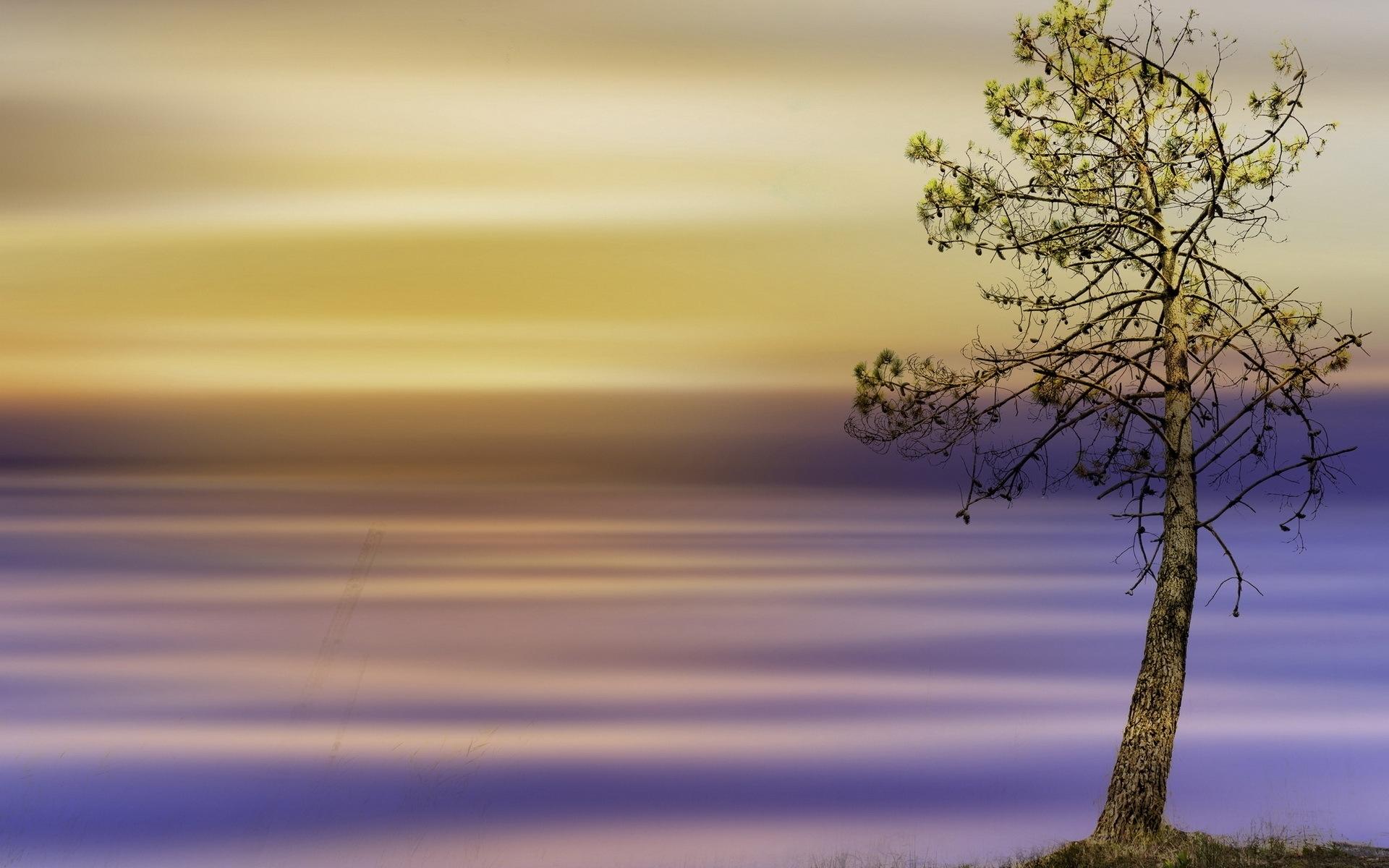 24765 скачать обои Пейзаж, Деревья - заставки и картинки бесплатно