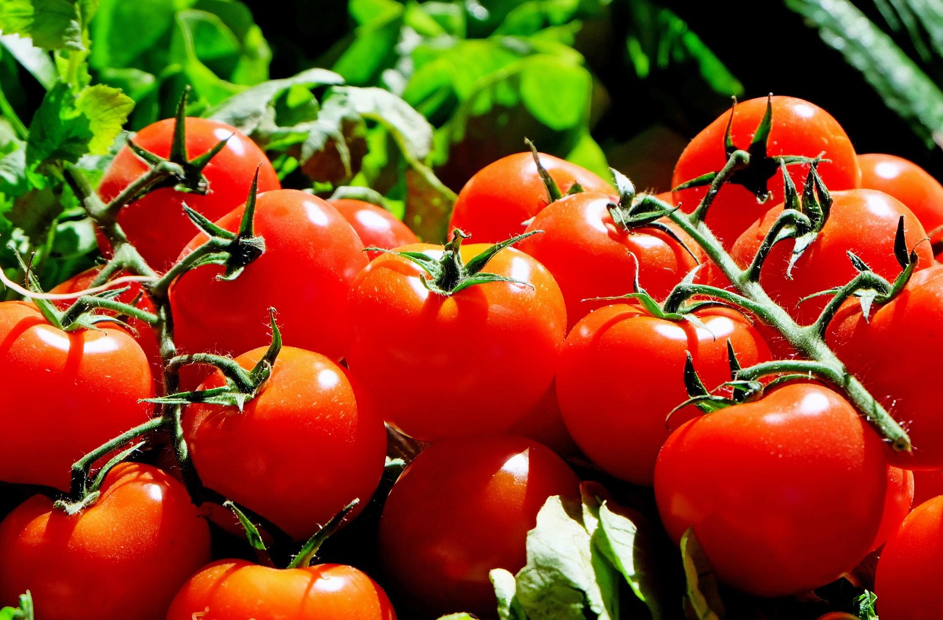 95118 Заставки и Обои Овощи на телефон. Скачать Овощи, Еда, Ветка, Томаты картинки бесплатно