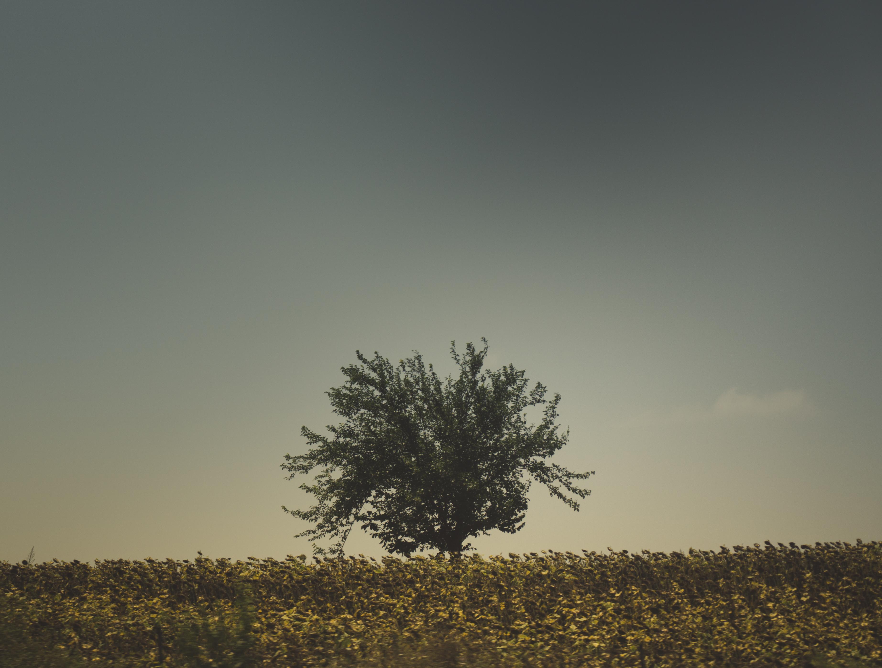 74507 скачать обои Природа, Дерево, Трава, Небо - заставки и картинки бесплатно