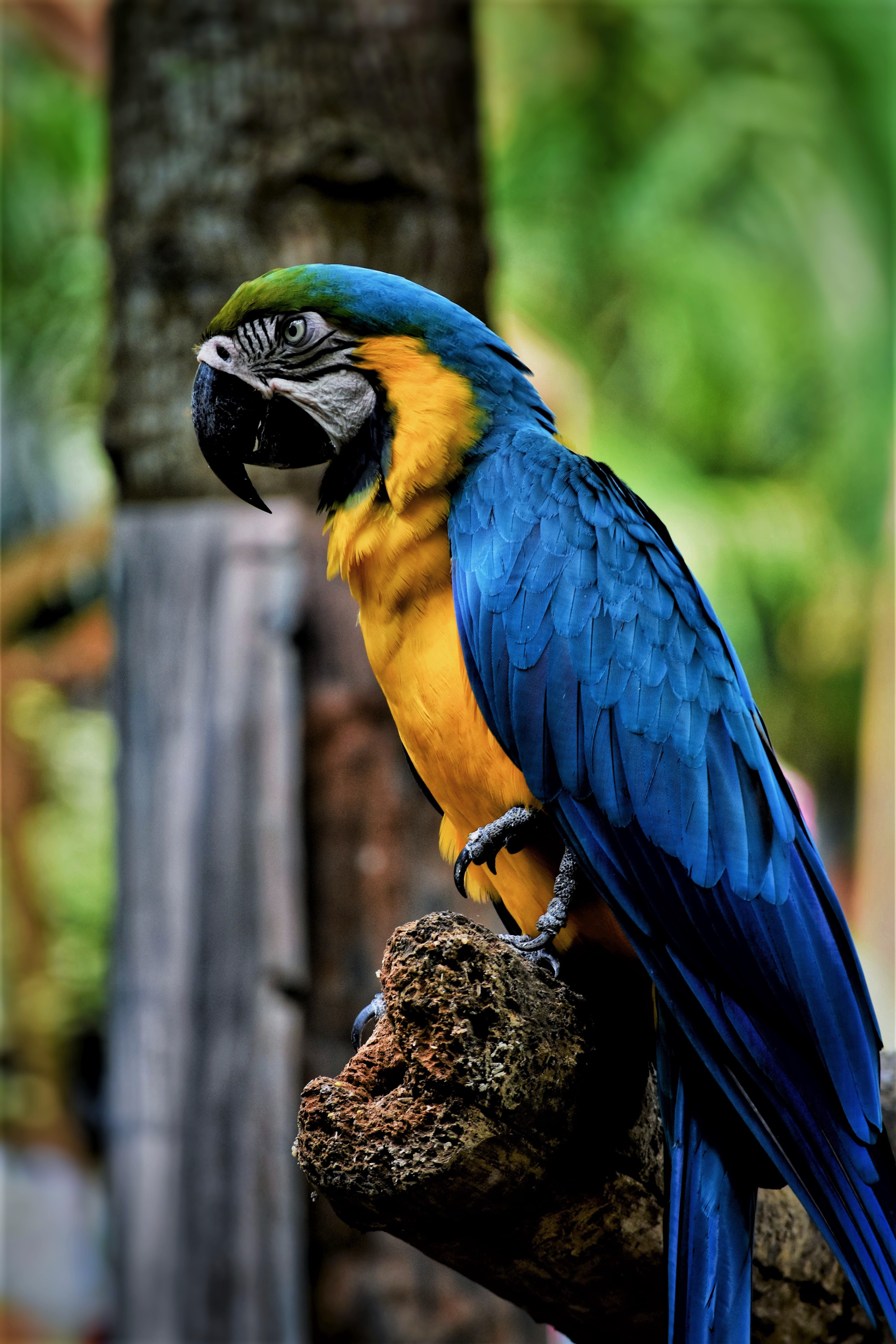 122749 Screensavers and Wallpapers Parrots for phone. Download Parrots, Animals, Bird, Beak, Color, Macaw pictures for free