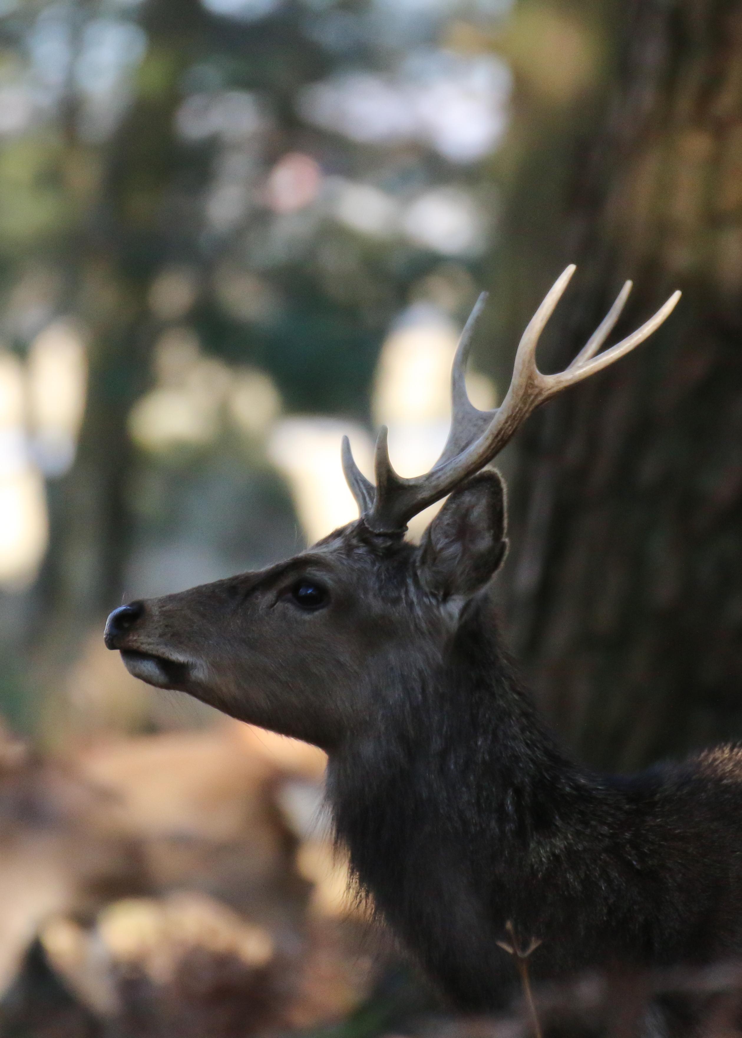 102203 скачать обои Животные, Олень, Животное, Коричневый, Дикая Природа - заставки и картинки бесплатно