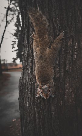 105692 Screensavers and Wallpapers Funny for phone. Download Animals, Squirrel, Rodent, Funny, Dexterous, Deft pictures for free