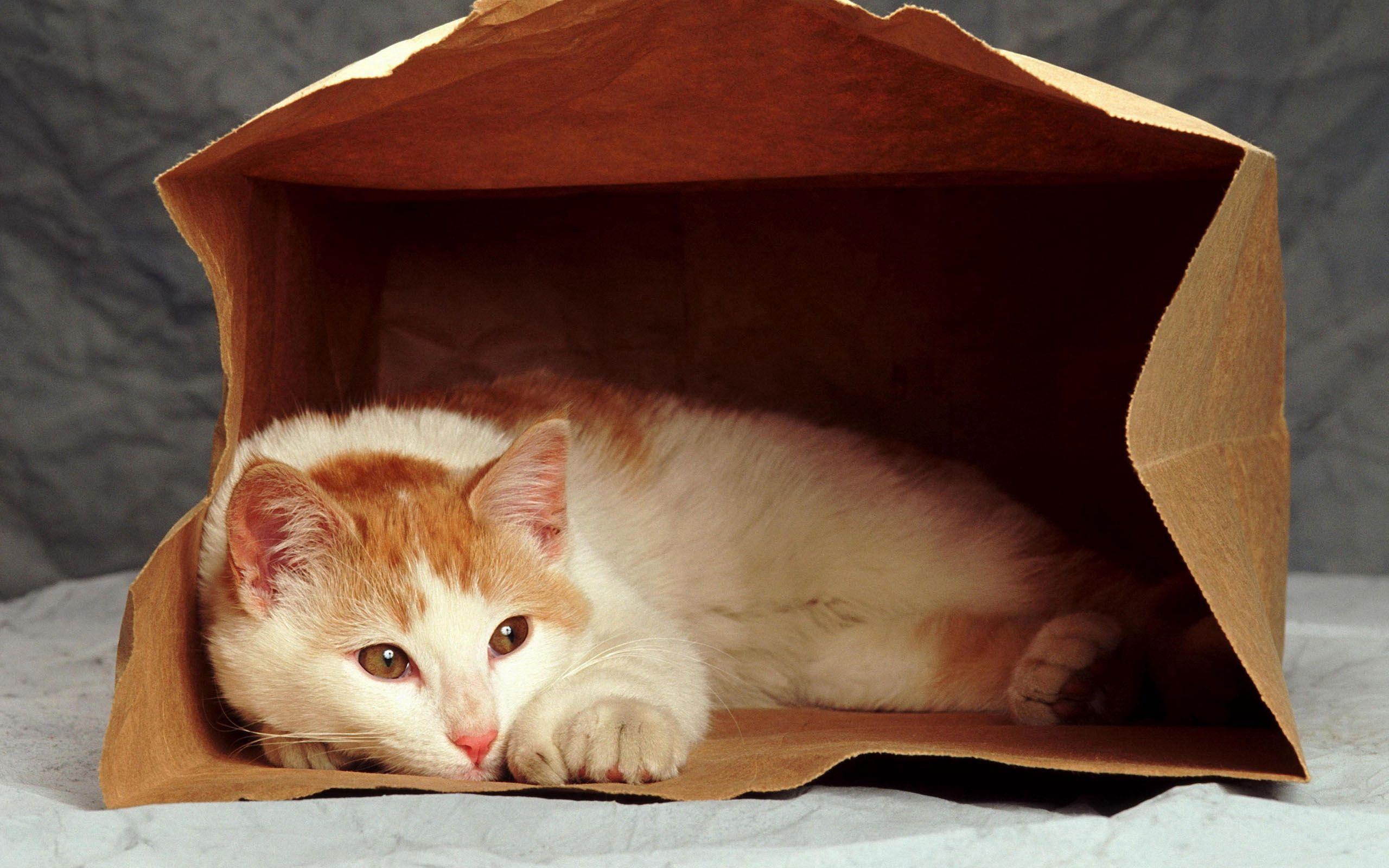 134871 скачать обои Животные, Кот, Грусть, Лежать, Пакет - заставки и картинки бесплатно
