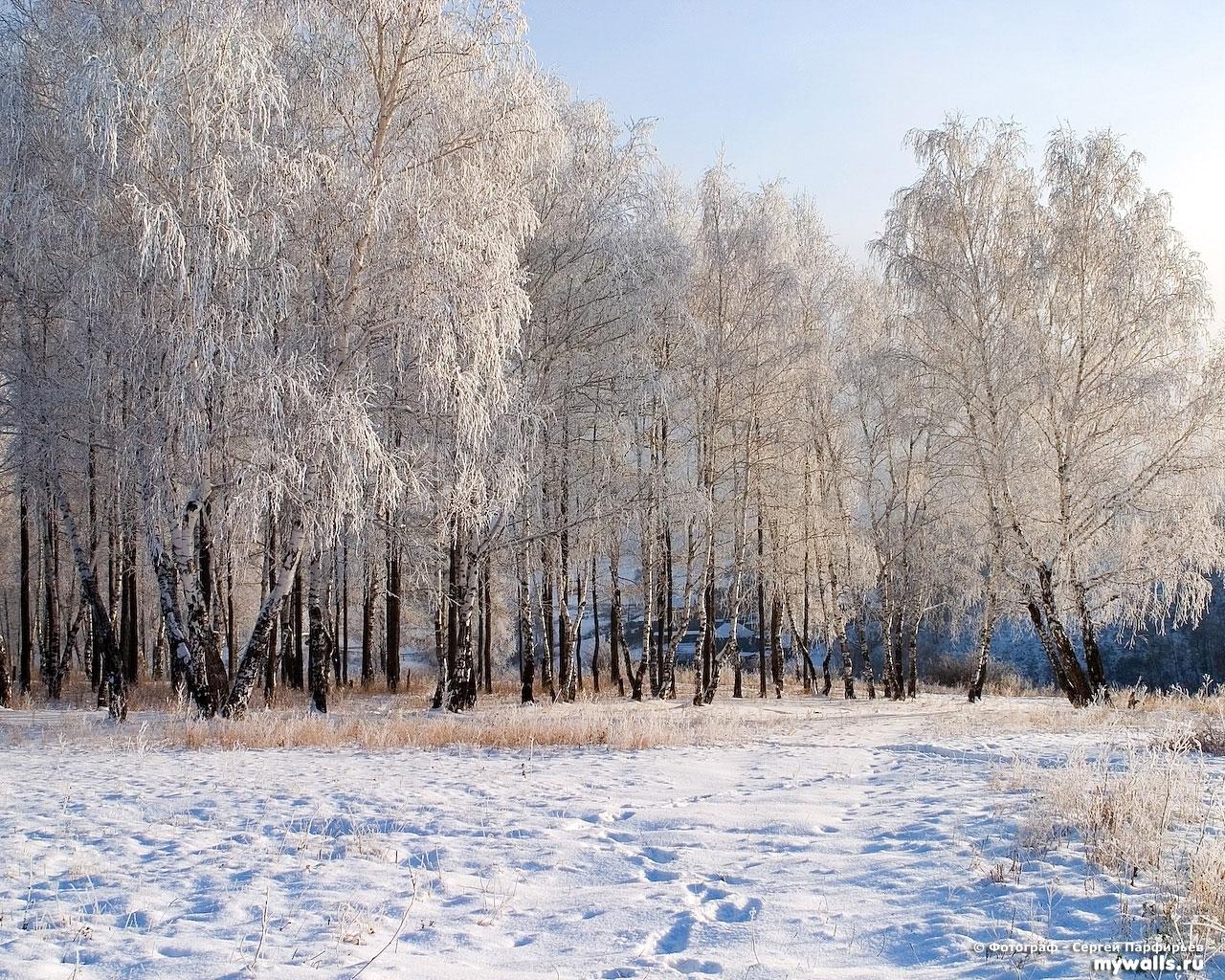 2012 скачать обои Пейзаж, Зима, Деревья, Снег - заставки и картинки бесплатно