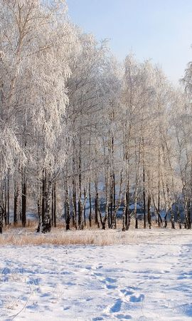 2012 download wallpaper Landscape, Winter, Trees, Snow screensavers and pictures for free