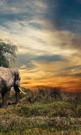 75476 download wallpaper Animals, Elephant, Trees, Grass screensavers and pictures for free