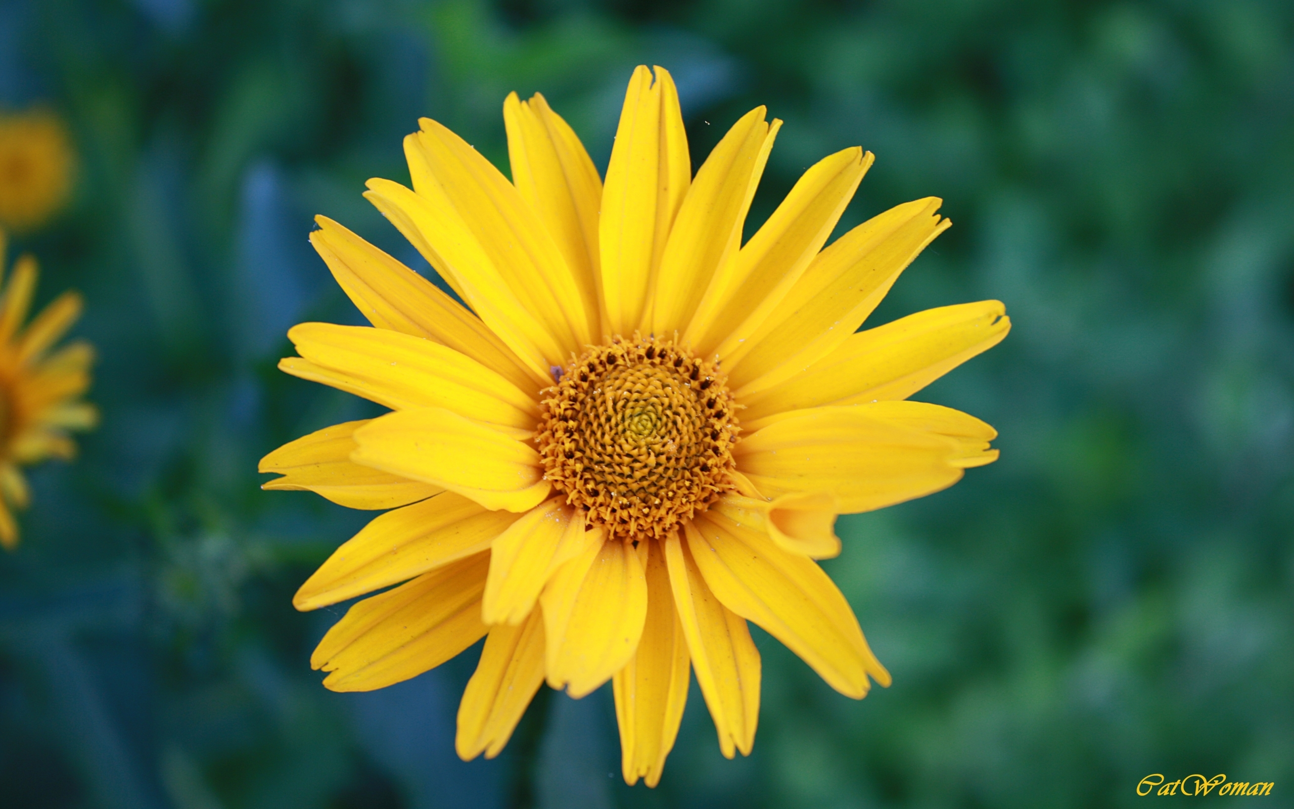 3717 скачать обои Растения, Цветы - заставки и картинки бесплатно