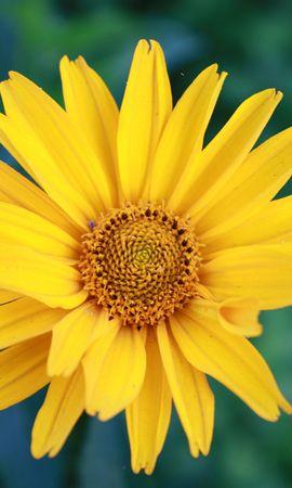 3717 descargar fondo de pantalla Plantas, Flores: protectores de pantalla e imágenes gratis