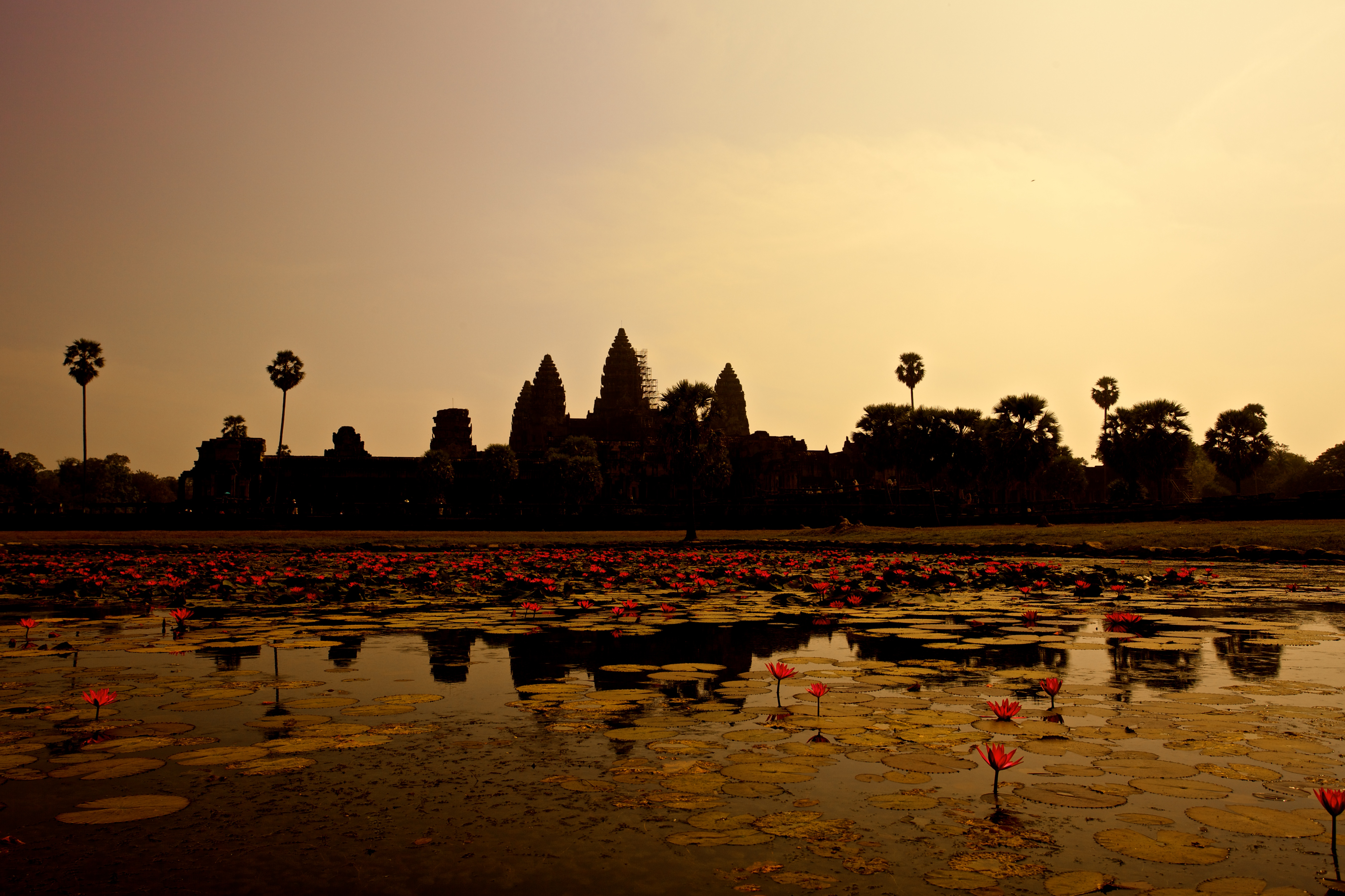 154449 download wallpaper Nature, Lilies, Panorama, Pond, Cambodia screensavers and pictures for free