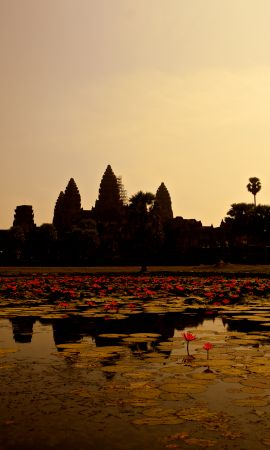 154449 скачать обои Природа, Пруд, Лилии, Панорама, Камбоджа - заставки и картинки бесплатно