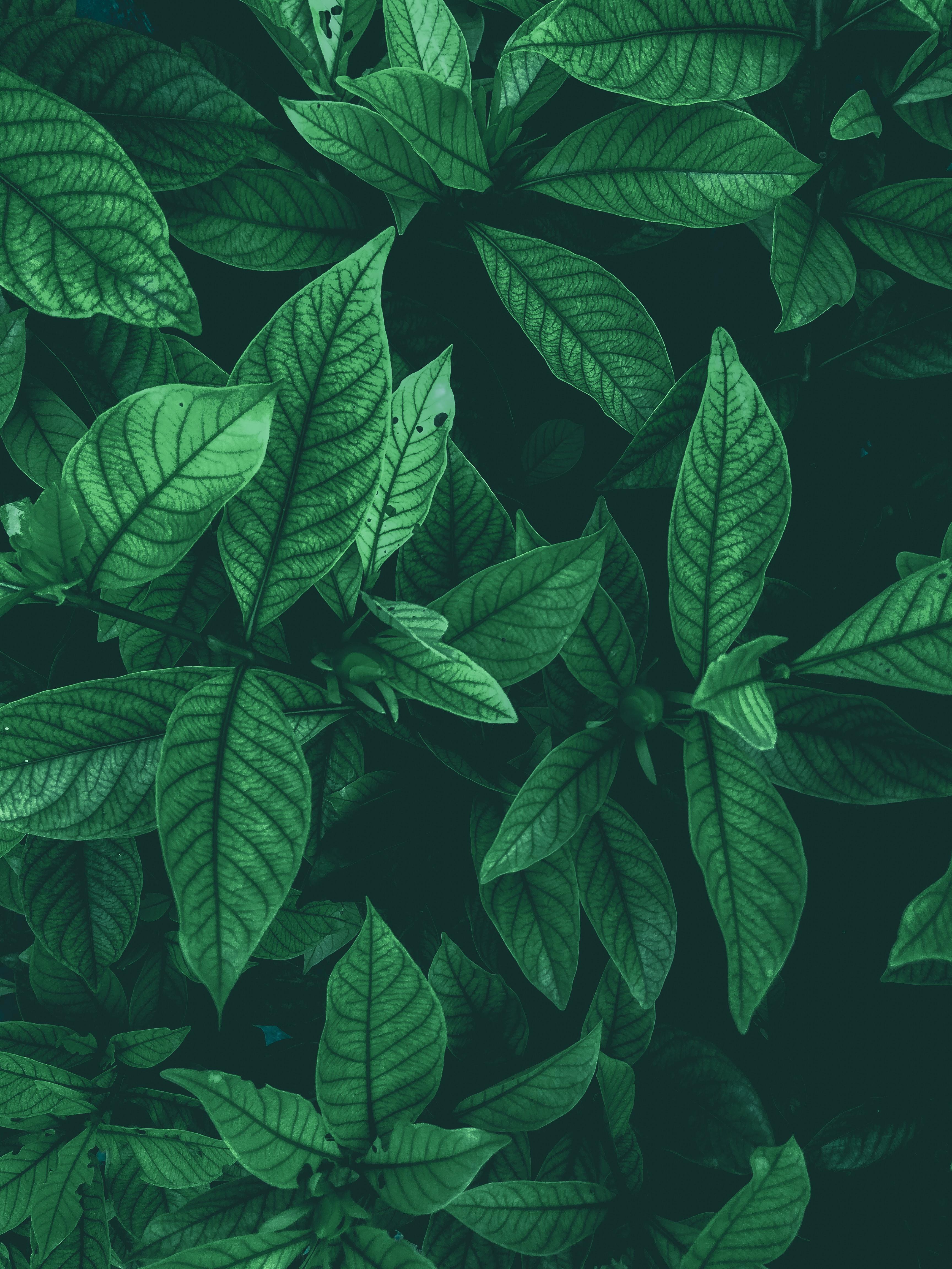 152741 обои 720x1520 на телефон бесплатно, скачать картинки Природа, Листья, Вид Сверху, Зеленый, Бутоны 720x1520 на мобильный
