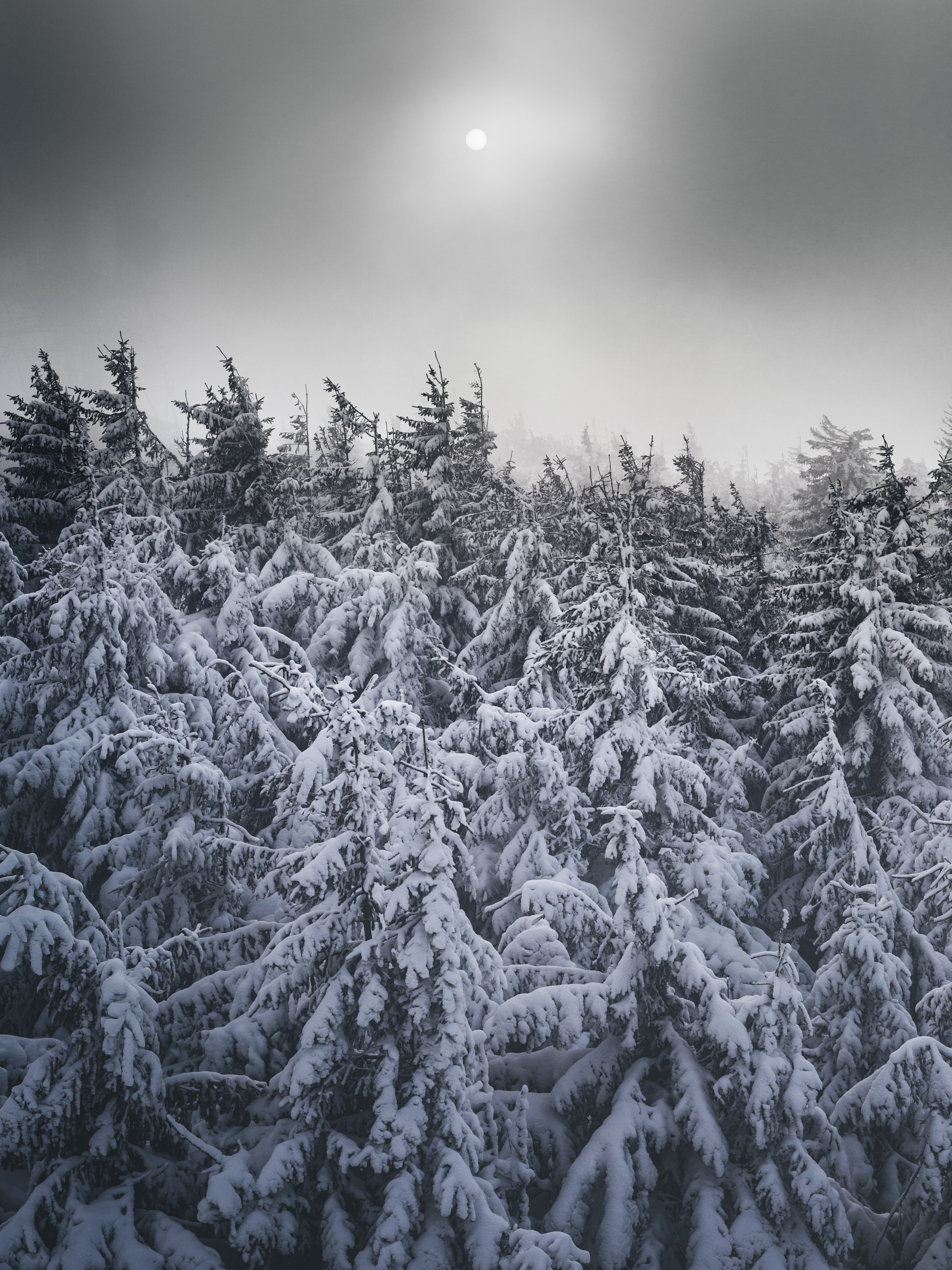 125257 download wallpaper Nature, Snow, Trees, Winter, Snow Covered, Snowbound, Fir-Trees screensavers and pictures for free