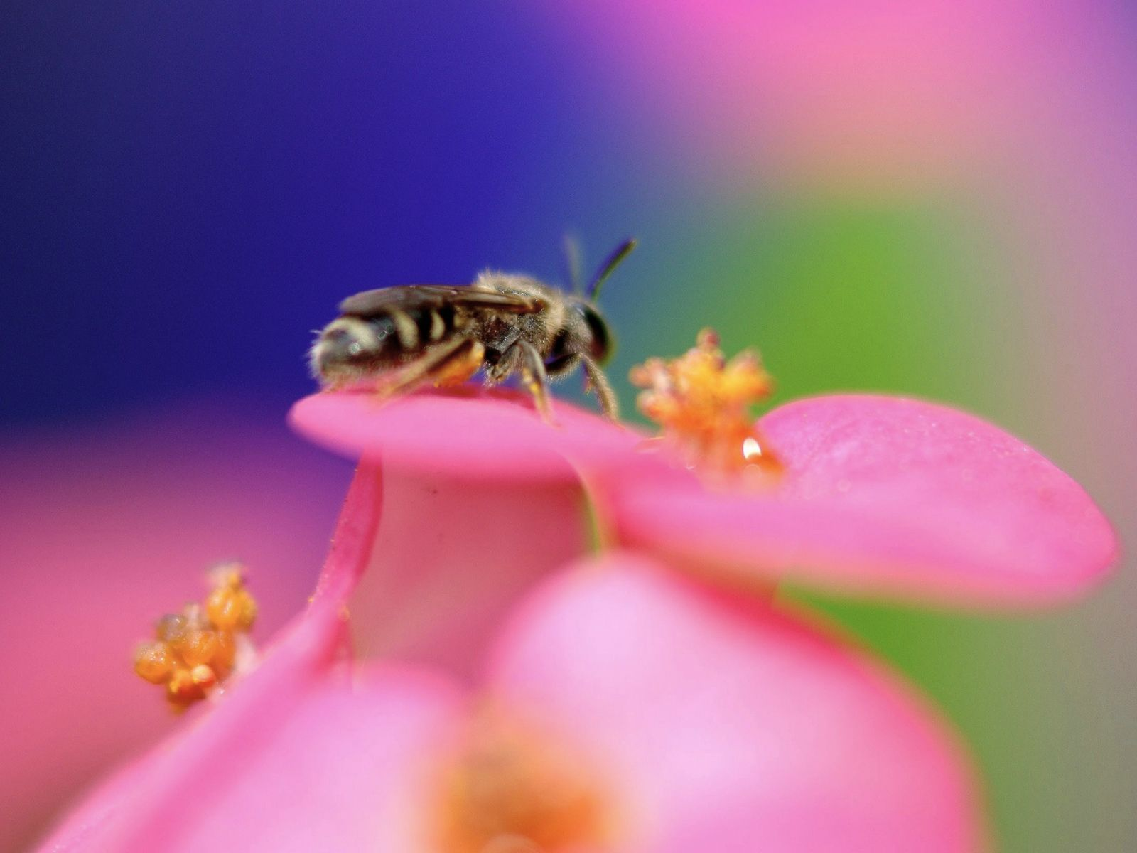 4718 Screensavers and Wallpapers Bees for phone. Download Insects, Bees pictures for free