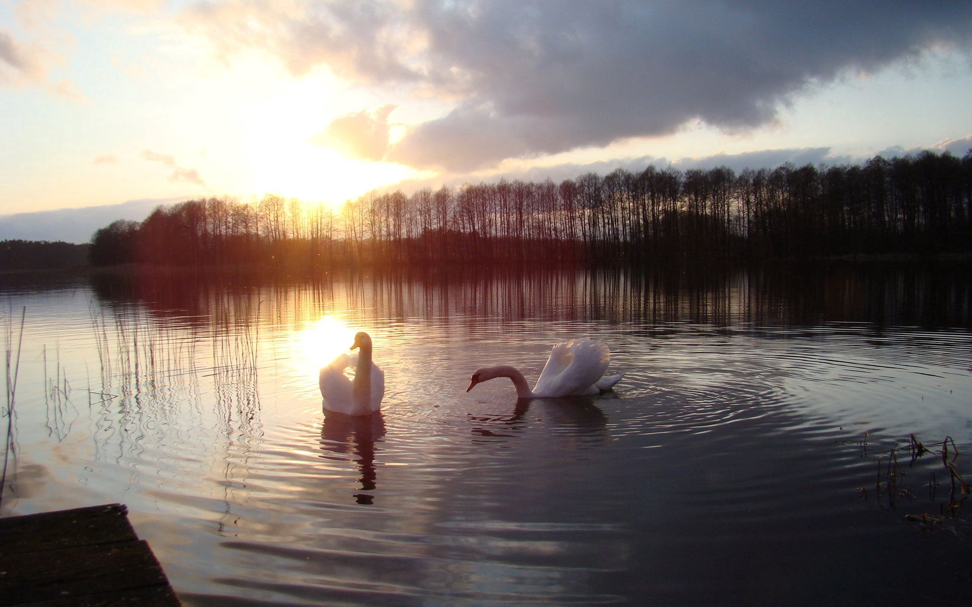 99762 download wallpaper Animals, Swans, Lake, Silhouette, Bird, Sun screensavers and pictures for free