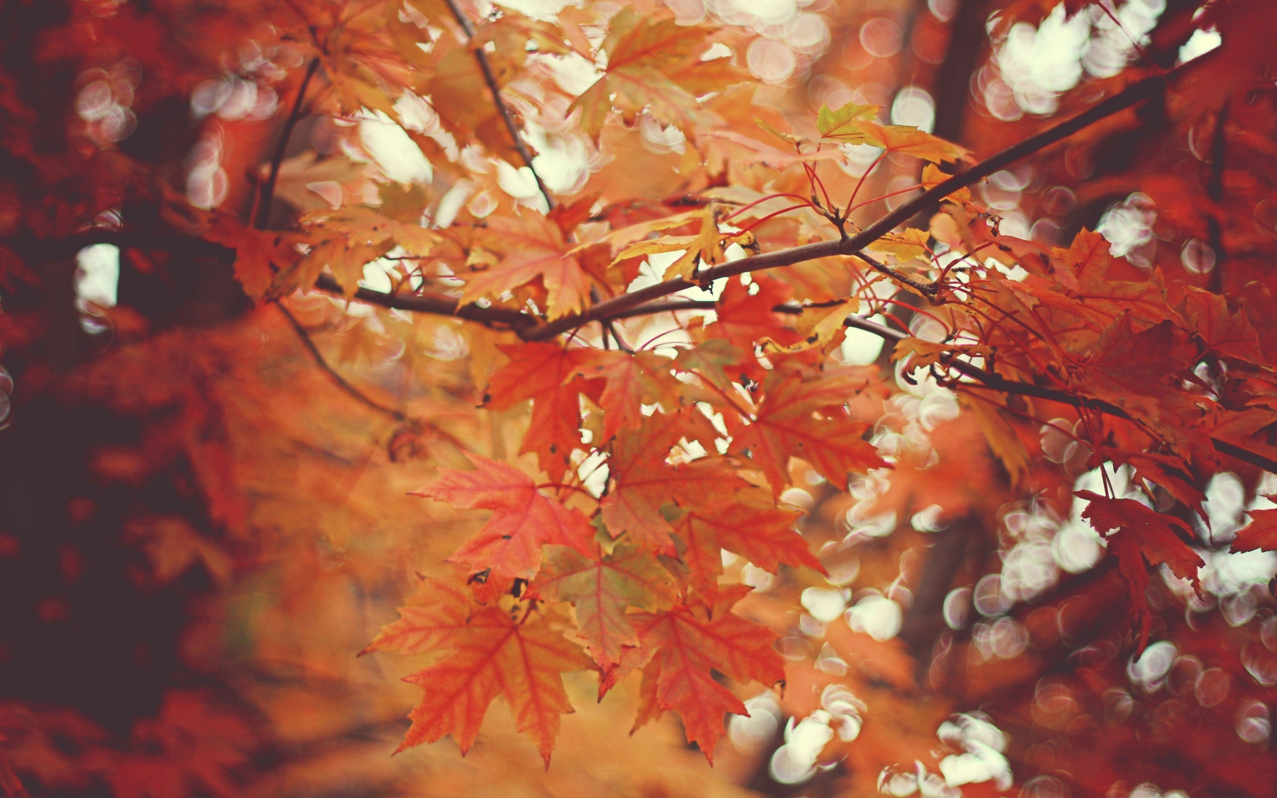 34811 download wallpaper Autumn, Leaves, Pictures screensavers and pictures for free