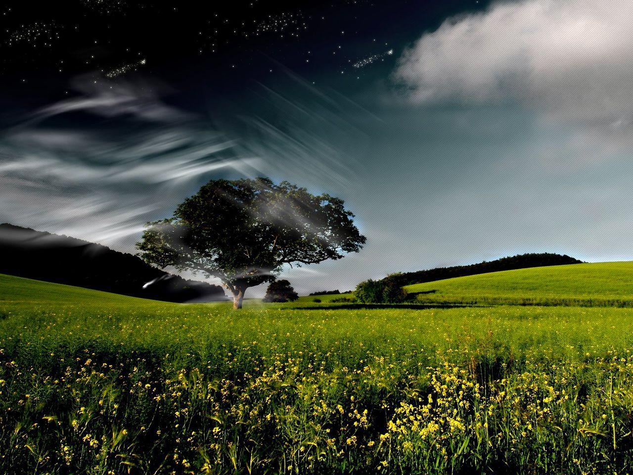 9446 скачать обои Пейзаж, Трава, Небо - заставки и картинки бесплатно
