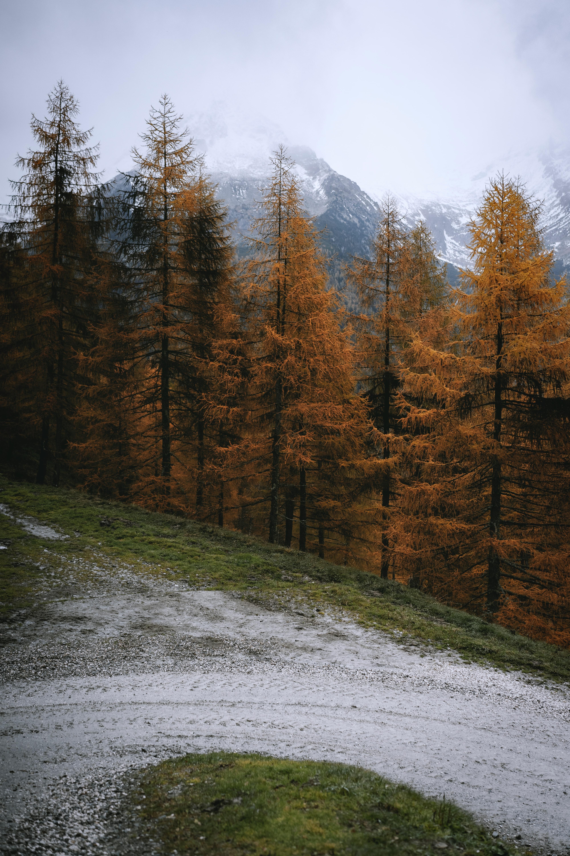101663 Hintergrundbild 240x400 kostenlos auf deinem Handy, lade Bilder Landschaft, Natur, Bäume, Kiefer, Berg 240x400 auf dein Handy herunter